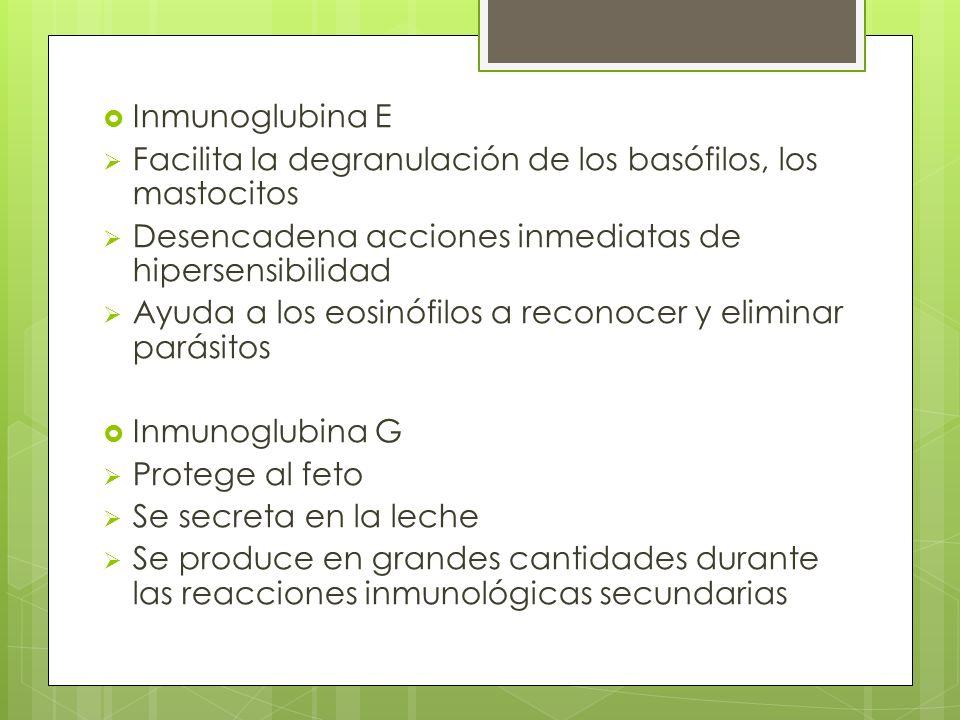 Inmunoglubina E Facilita la degranulación de los basófilos, los mastocitos. Desencadena acciones inmediatas de hipersensibilidad.