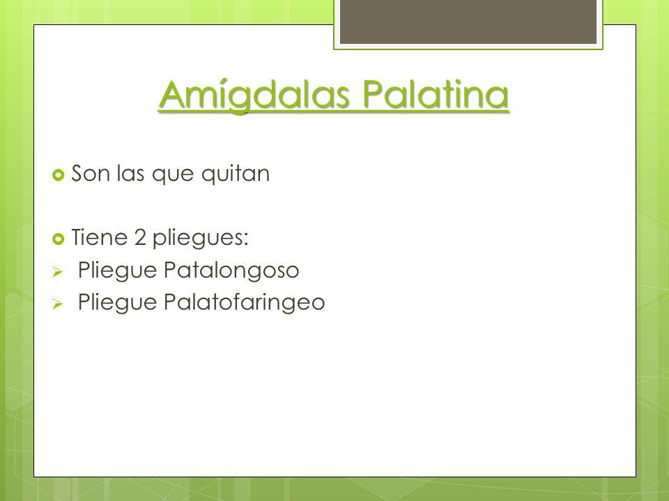 Amígdalas Palatina Son las que quitan Tiene 2 pliegues: