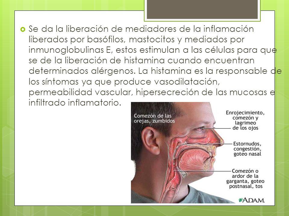 Se da la liberación de mediadores de la inflamación liberados por basófilos, mastocitos y mediados por inmunoglobulinas E, estos estimulan a las células para que se de la liberación de histamina cuando encuentran determinados alérgenos.
