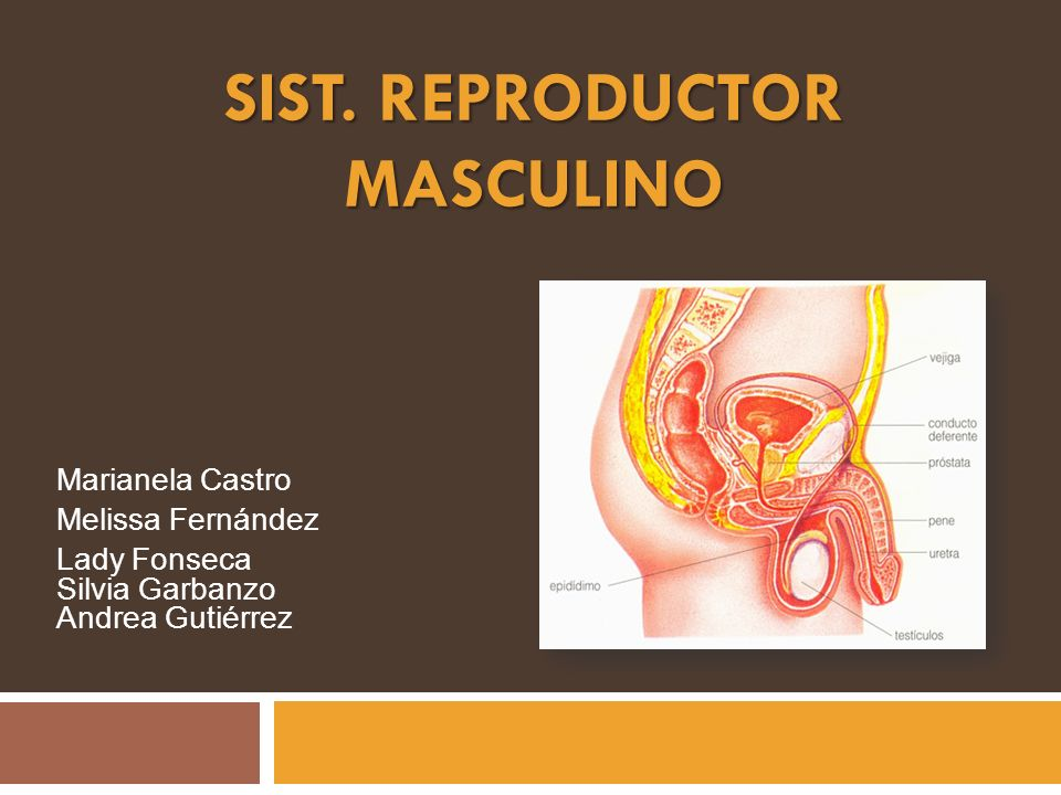 SISt. REPRODUCTOR MASCULINO