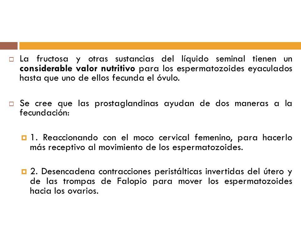 La fructosa y otras sustancias del líquido seminal tienen un considerable valor nutritivo para los espermatozoides eyaculados hasta que uno de ellos fecunda el óvulo.