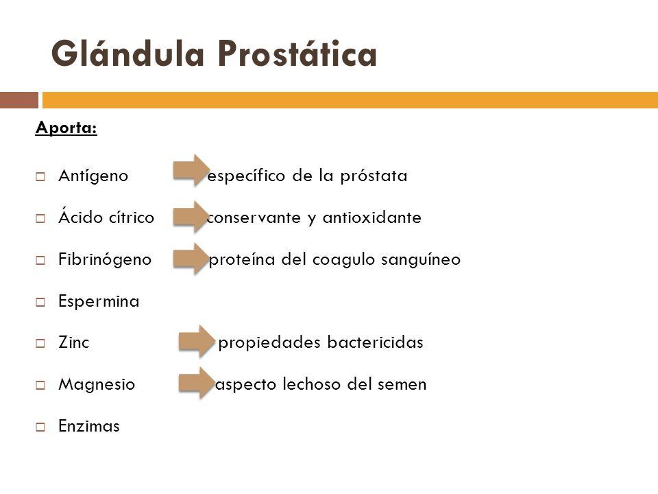 Glándula Prostática Aporta: Antígeno específico de la próstata