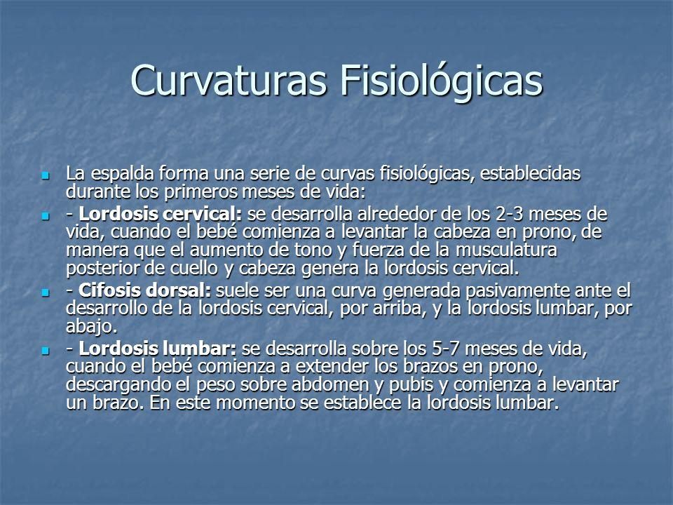 Curvaturas Fisiológicas