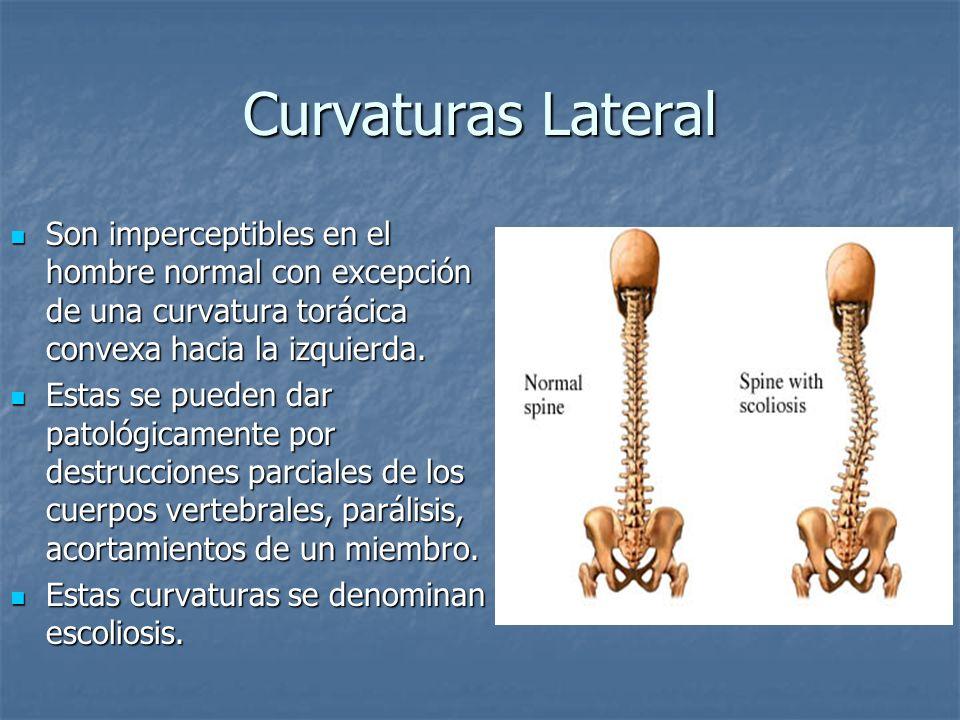 Curvaturas Lateral Son imperceptibles en el hombre normal con excepción de una curvatura torácica convexa hacia la izquierda.