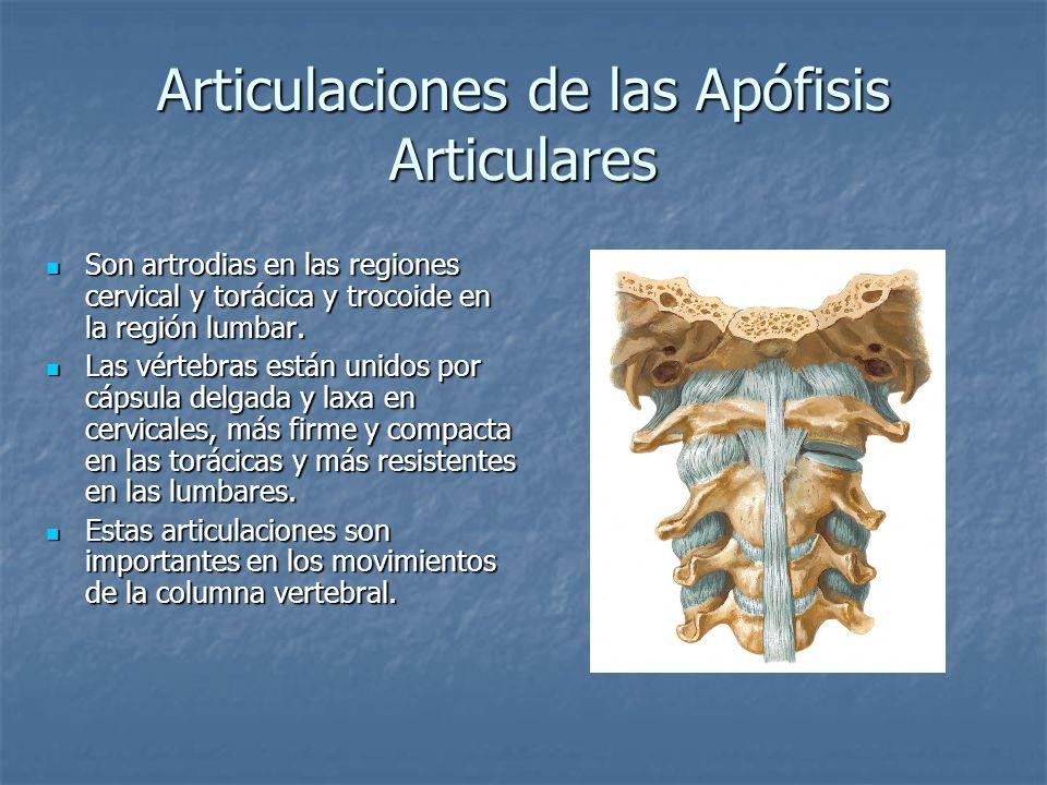 Articulaciones de las Apófisis Articulares