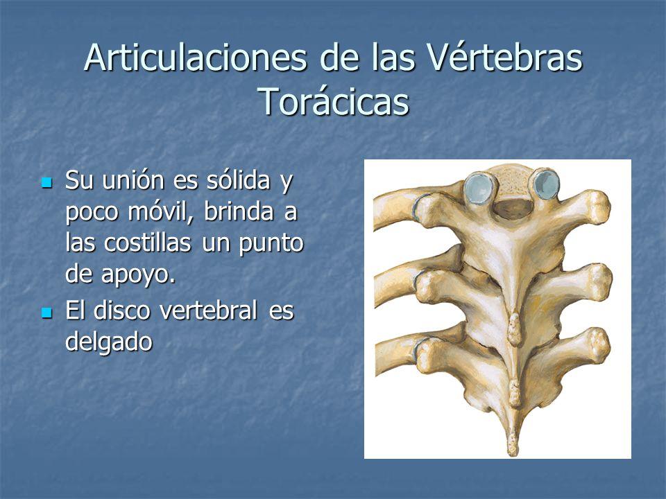 Articulaciones de las Vértebras Torácicas