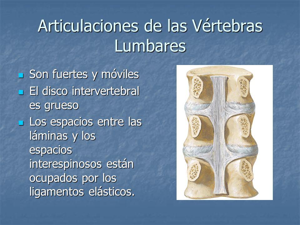 Articulaciones de las Vértebras Lumbares