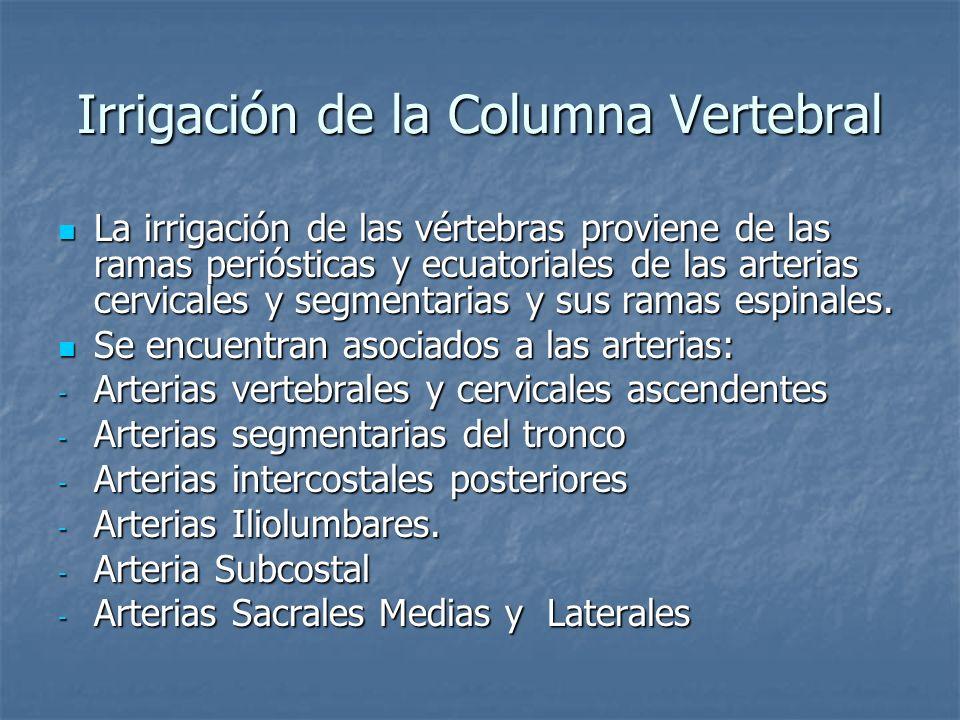 Irrigación de la Columna Vertebral