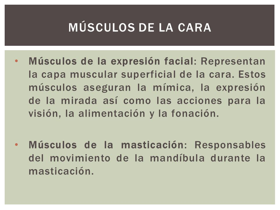 Músculos de la Cara
