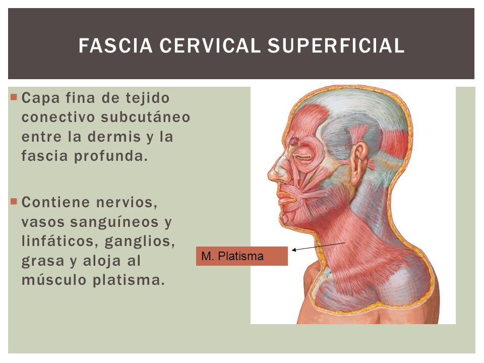Fascia Cervical superficial