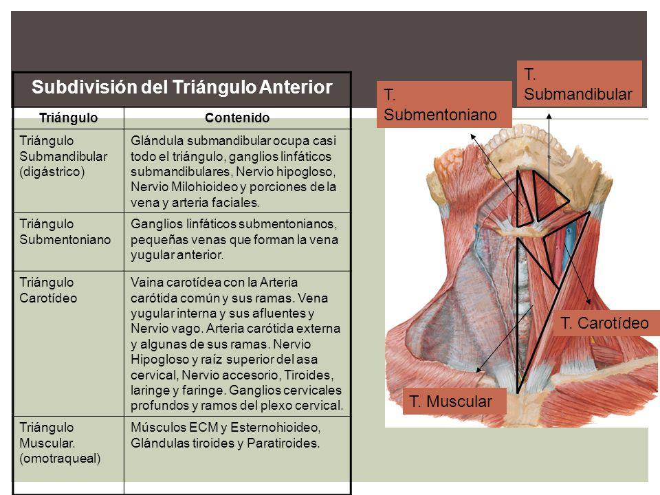 Subdivisión del Triángulo Anterior