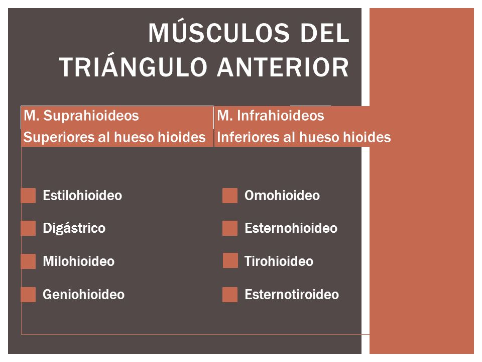 Músculos del Triángulo Anterior