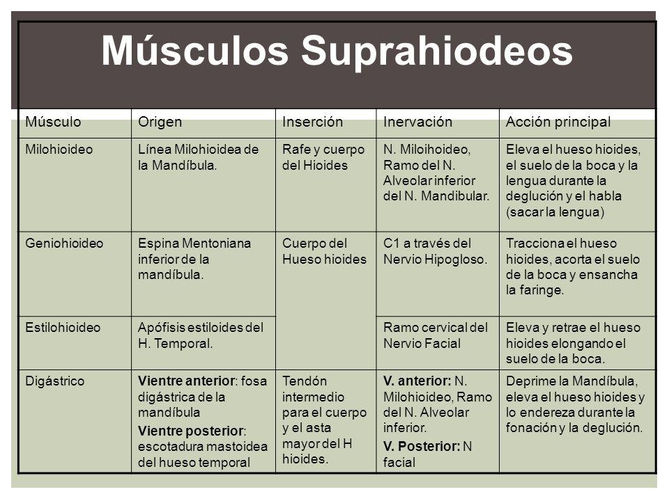 Músculos Suprahiodeos