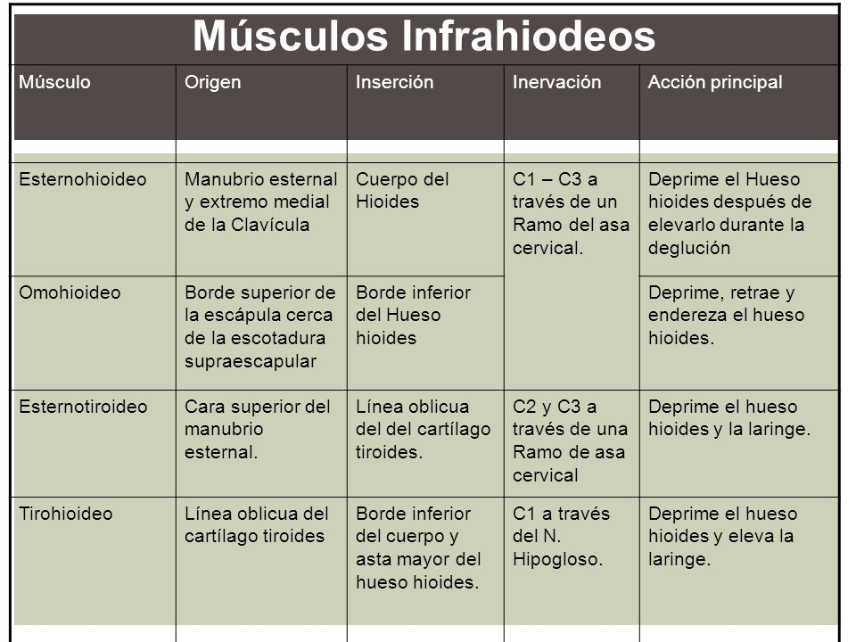Músculos Infrahiodeos