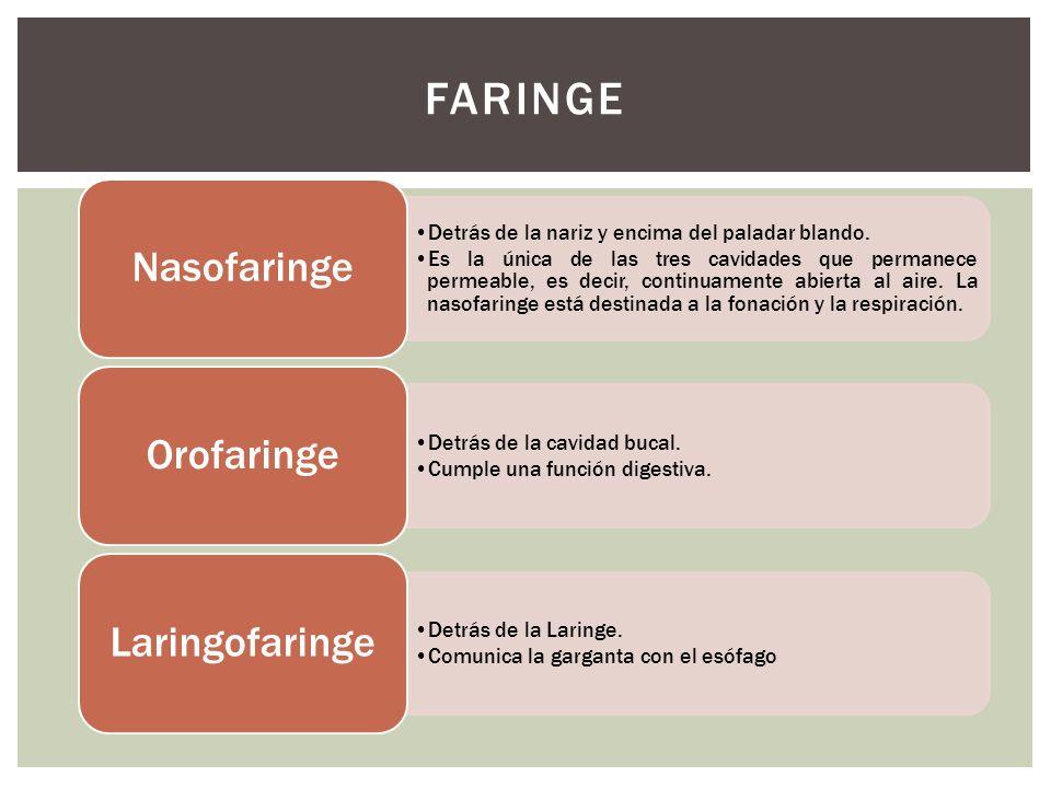 Faringe Nasofaringe Orofaringe Laringofaringe