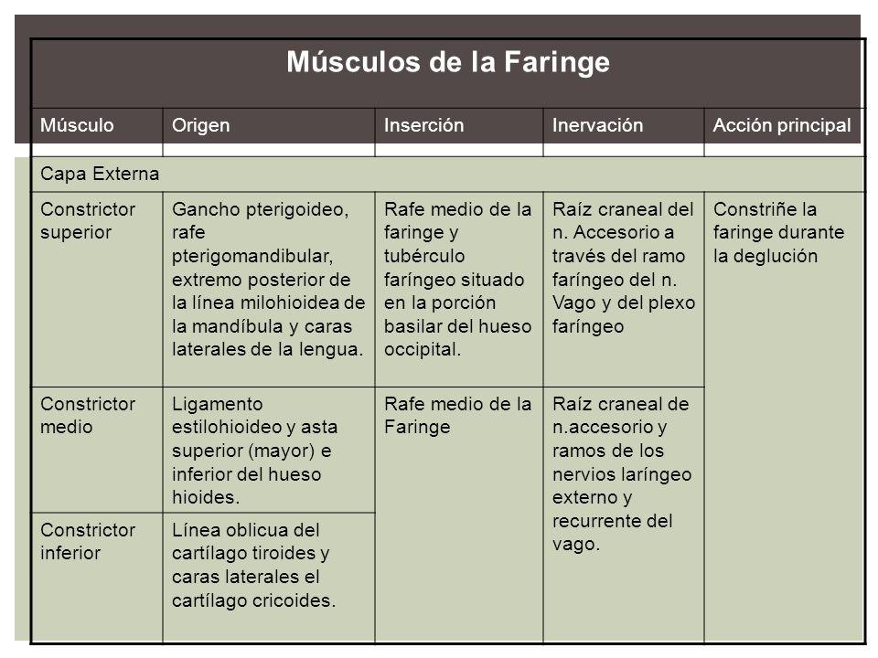 Músculos de la Faringe Músculo Origen Inserción Inervación