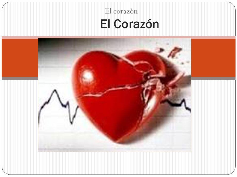 El Corazón El corazón