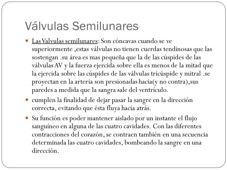 Válvulas Semilunares