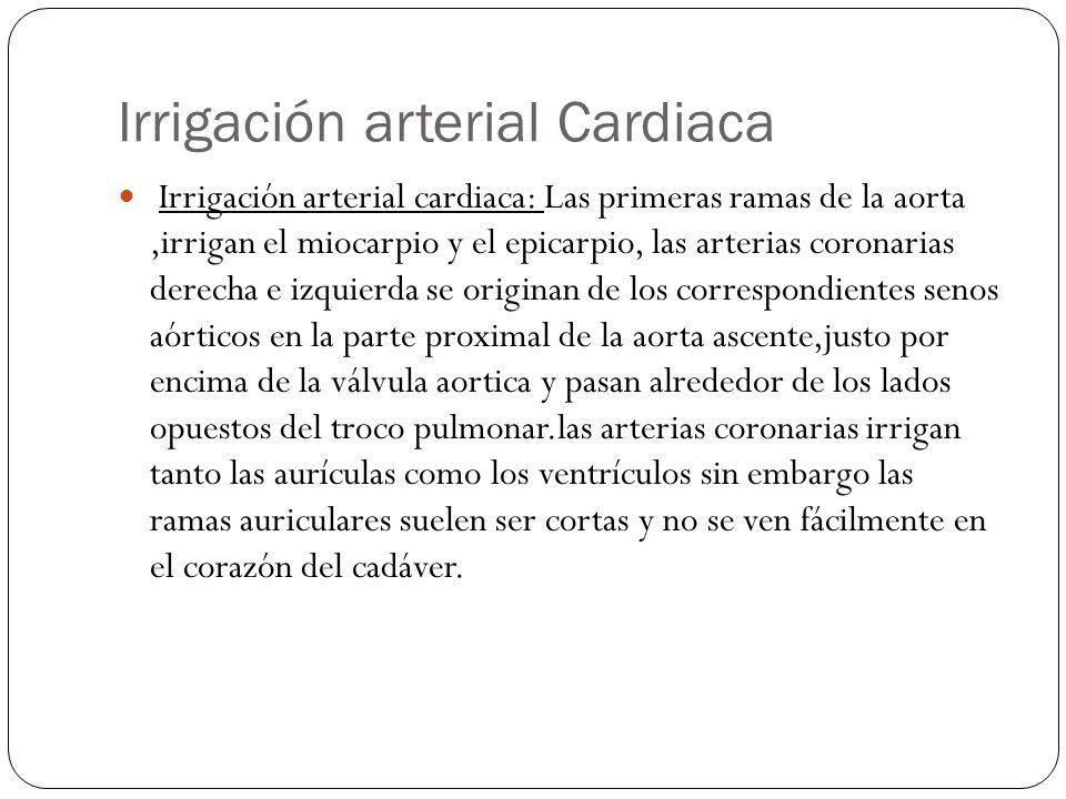 Irrigación arterial Cardiaca