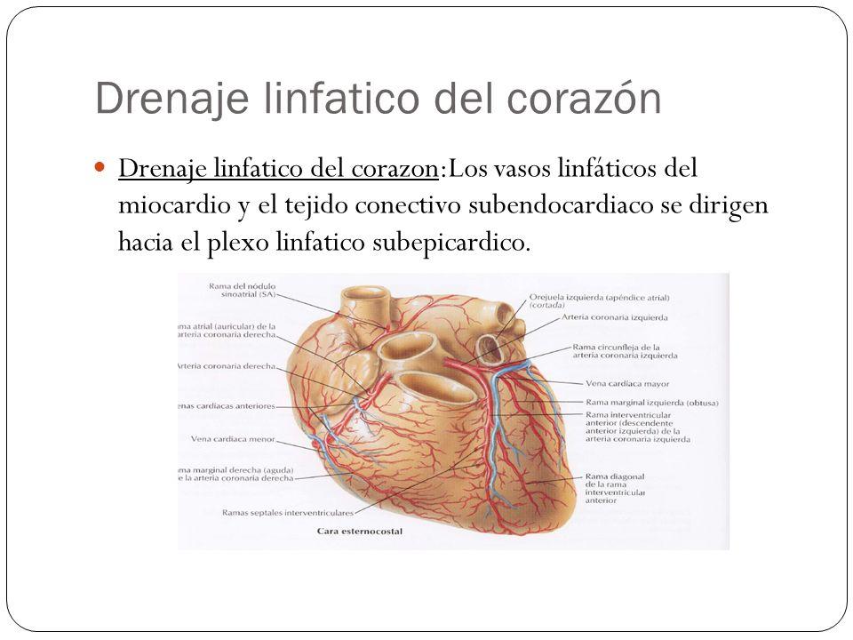 Drenaje linfatico del corazón