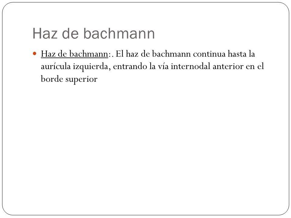 Haz de bachmann Haz de bachmann:.