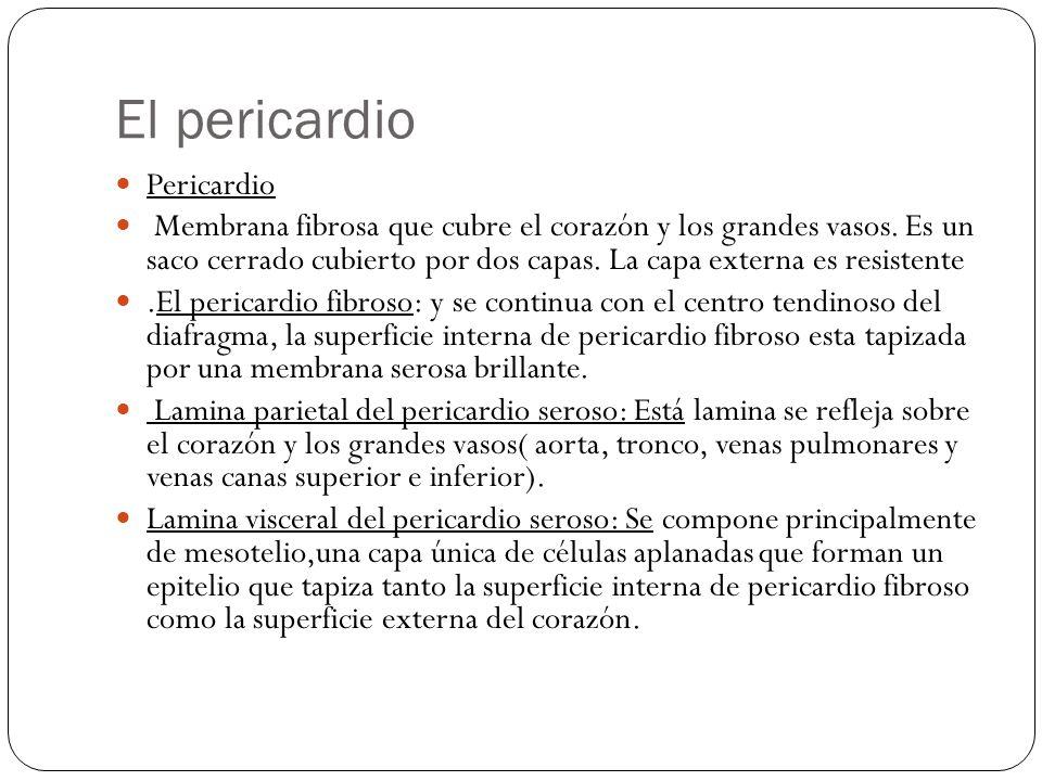 El pericardio Pericardio