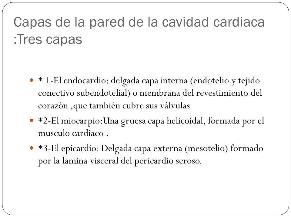 Capas de la pared de la cavidad cardiaca :Tres capas