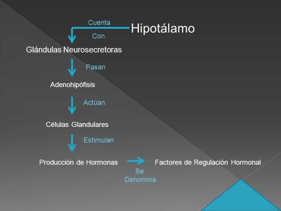 Hipotálamo Glándulas Neurosecretoras Cuenta Con Pasan Adenohipófisis