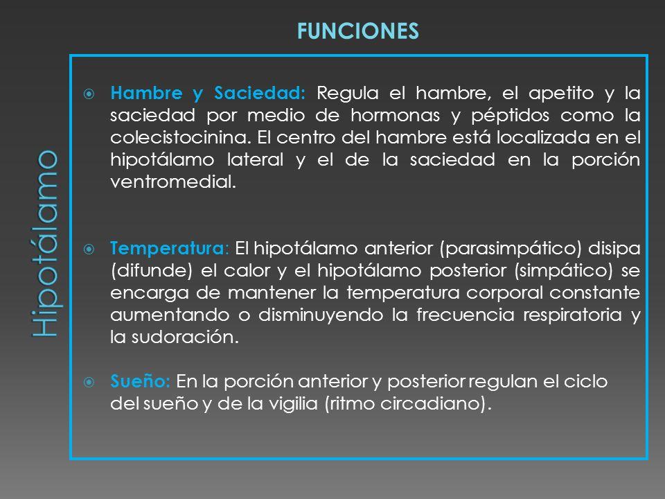 FUNCIONES Hipotálamo.
