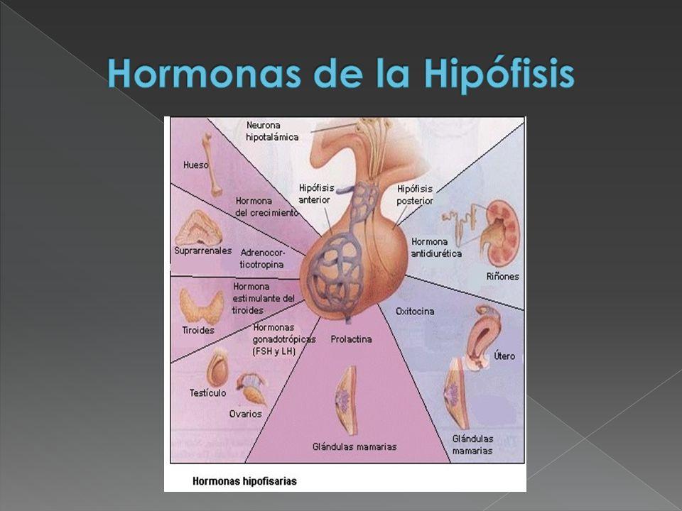 Hormonas de la Hipófisis