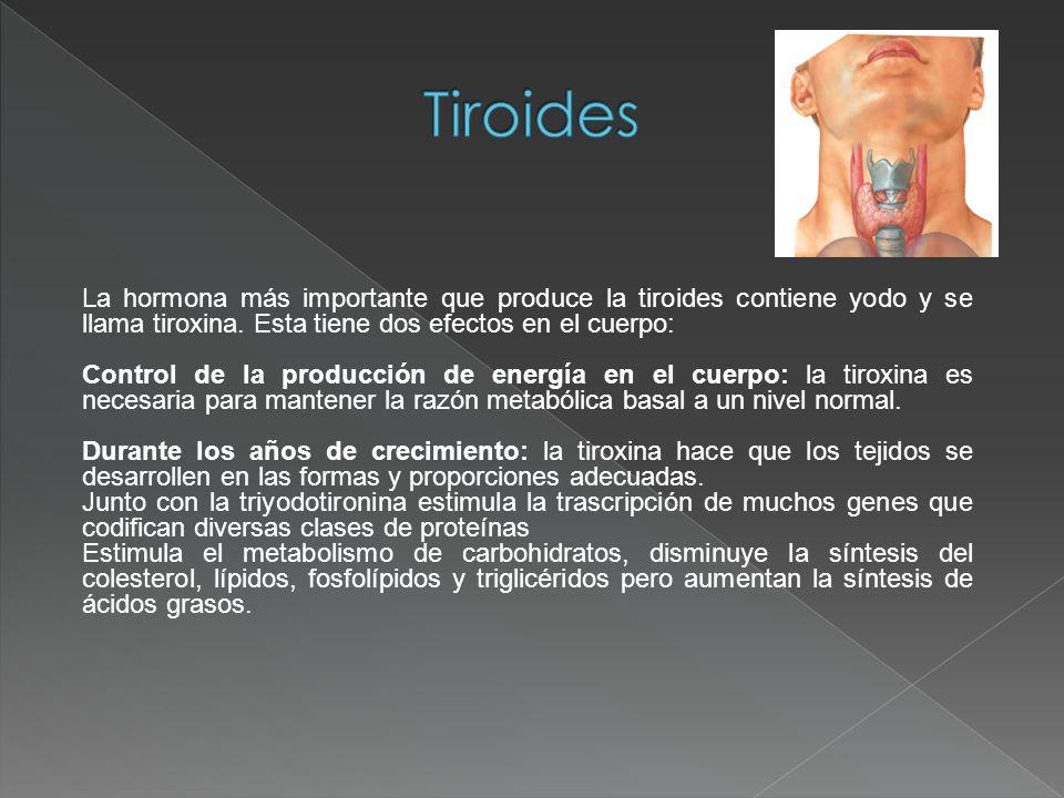 Tiroides La hormona más importante que produce la tiroides contiene yodo y se llama tiroxina. Esta tiene dos efectos en el cuerpo: