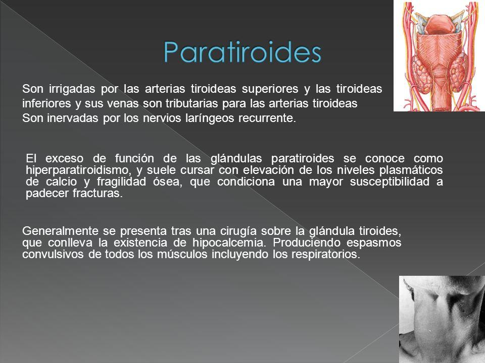Paratiroides Son irrigadas por las arterias tiroideas superiores y las tiroideas inferiores y sus venas son tributarias para las arterias tiroideas.
