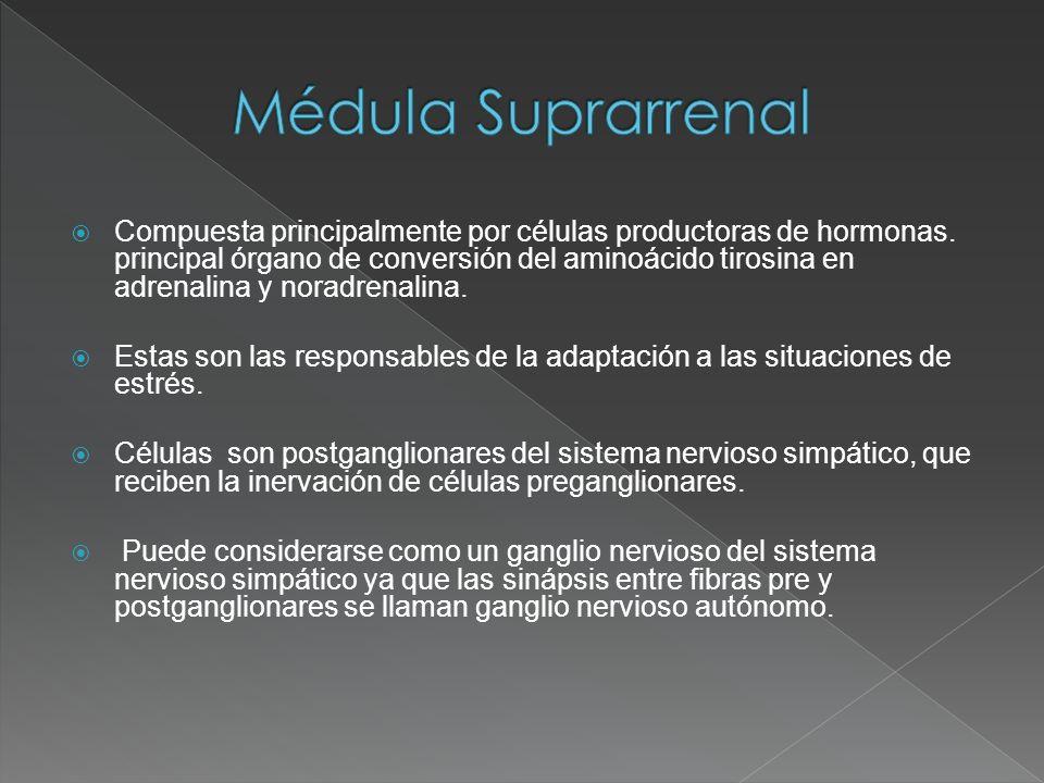 Médula Suprarrenal