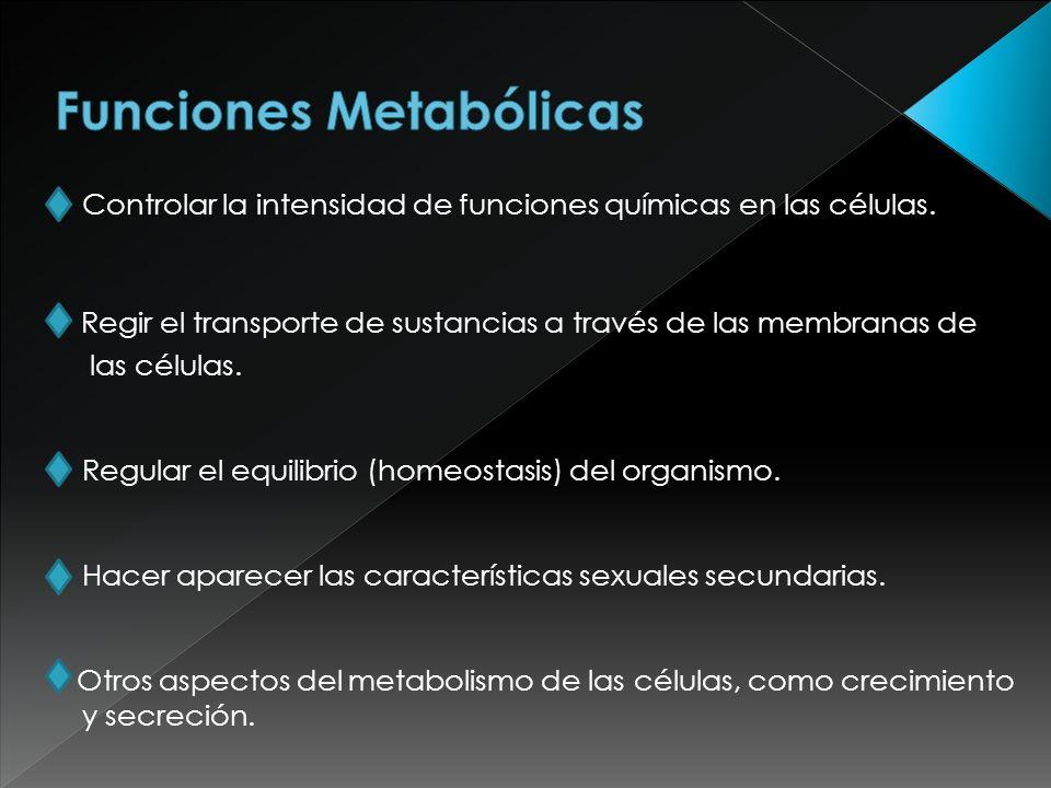 Funciones Metabólicas