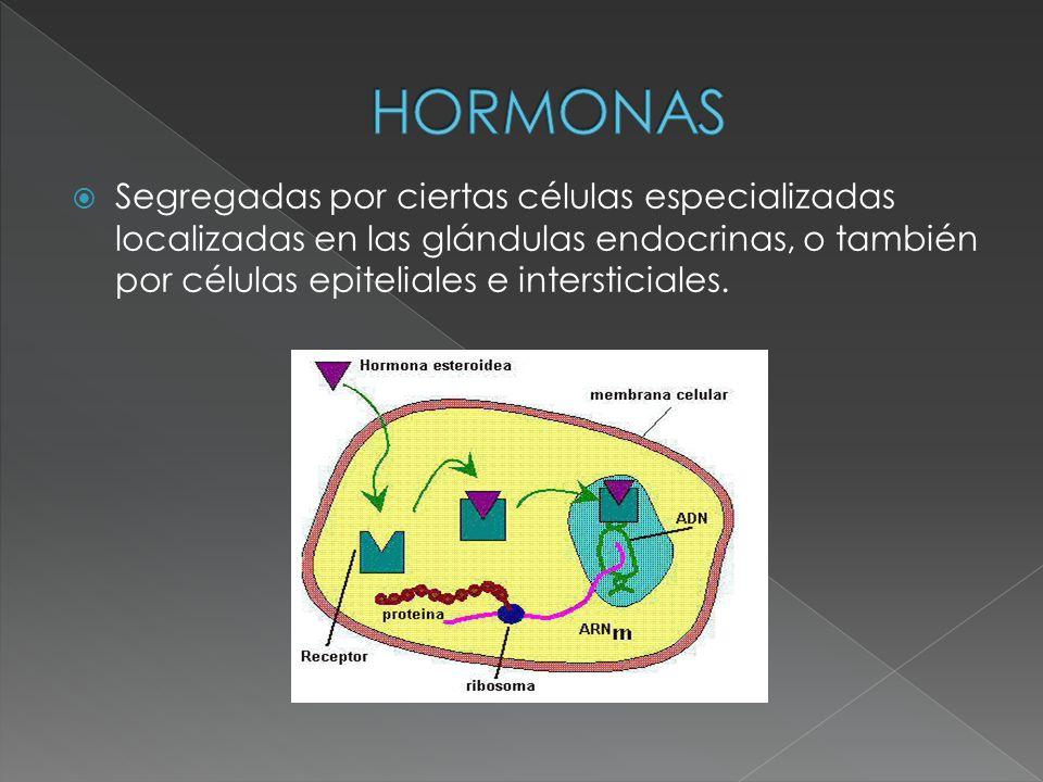 HORMONAS Segregadas por ciertas células especializadas localizadas en las glándulas endocrinas, o también por células epiteliales e intersticiales.