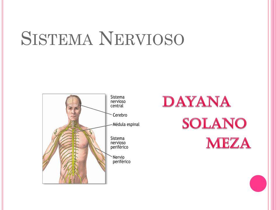 Sistema Nervioso Dayana Solano Meza