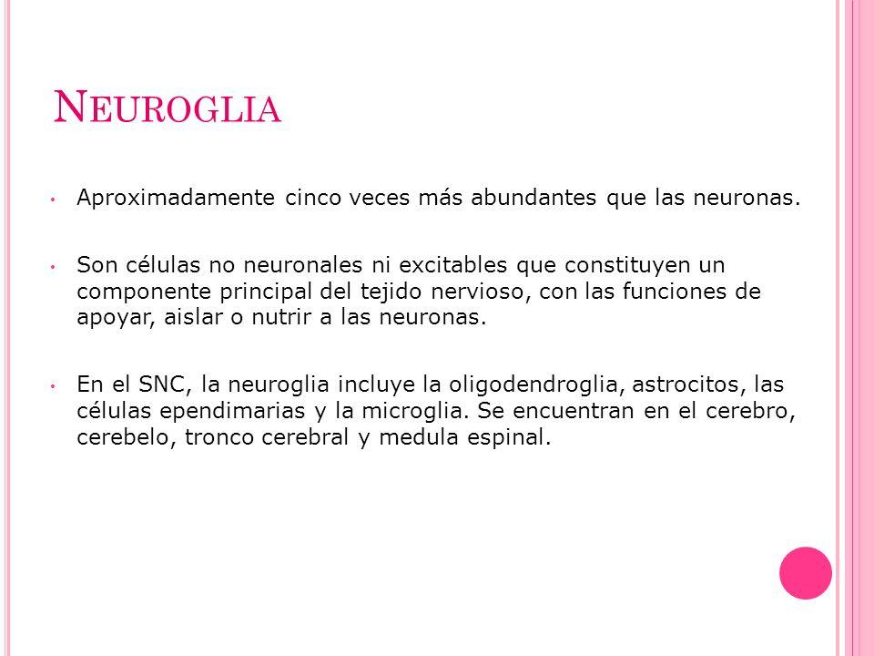 Neuroglia Aproximadamente cinco veces más abundantes que las neuronas.