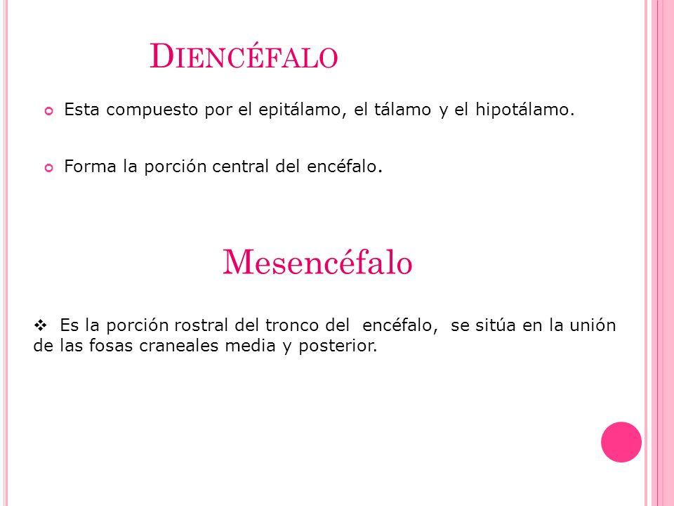 Diencéfalo Mesencéfalo