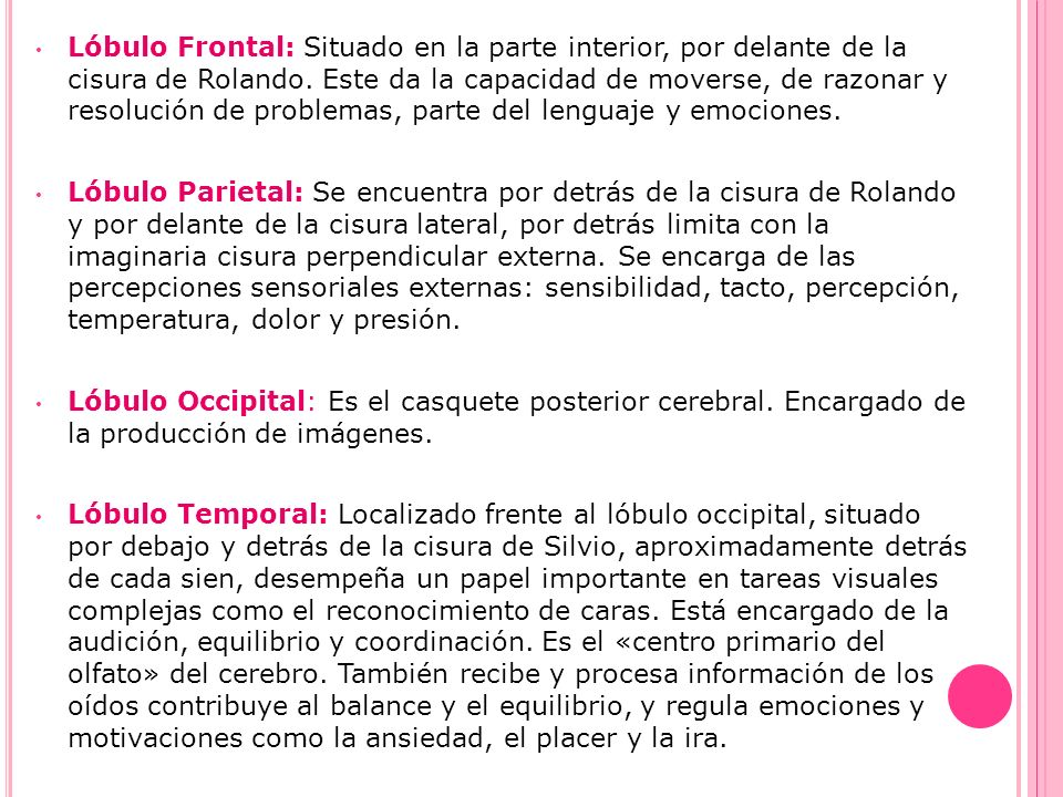 Lóbulo Frontal: Situado en la parte interior, por delante de la cisura de Rolando. Este da la capacidad de moverse, de razonar y resolución de problemas, parte del lenguaje y emociones.