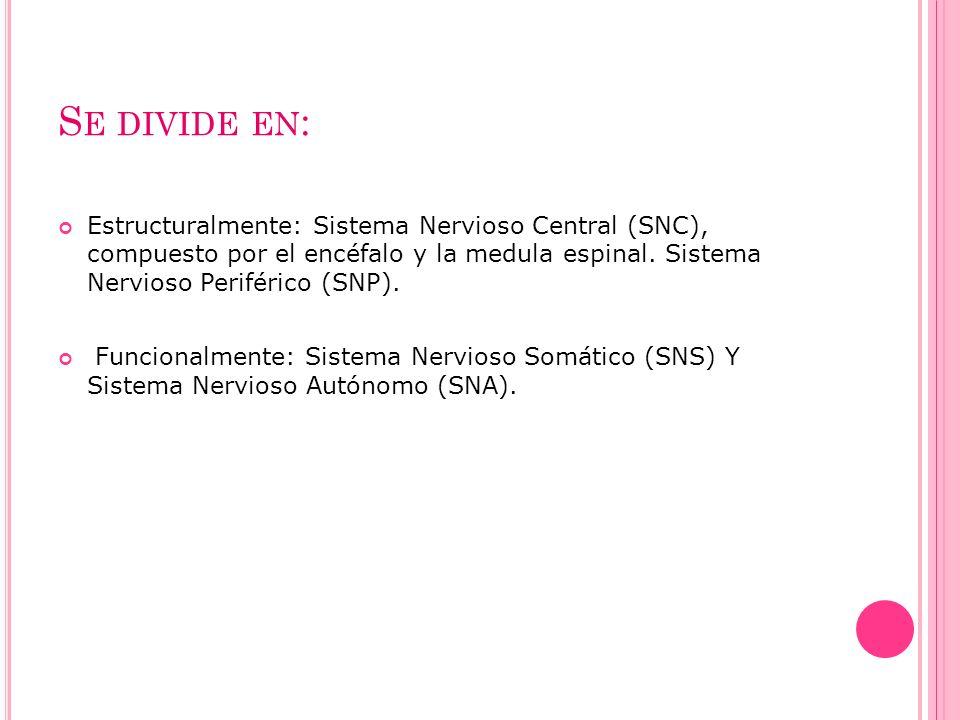 Se divide en: Estructuralmente: Sistema Nervioso Central (SNC), compuesto por el encéfalo y la medula espinal. Sistema Nervioso Periférico (SNP).