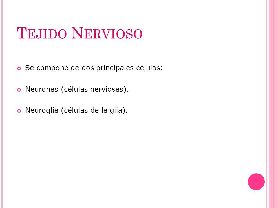 Tejido Nervioso Se compone de dos principales células: