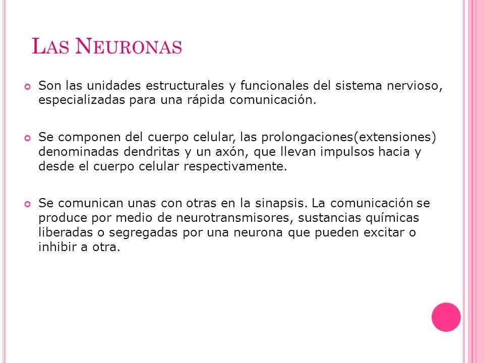 Las Neuronas Son las unidades estructurales y funcionales del sistema nervioso, especializadas para una rápida comunicación.