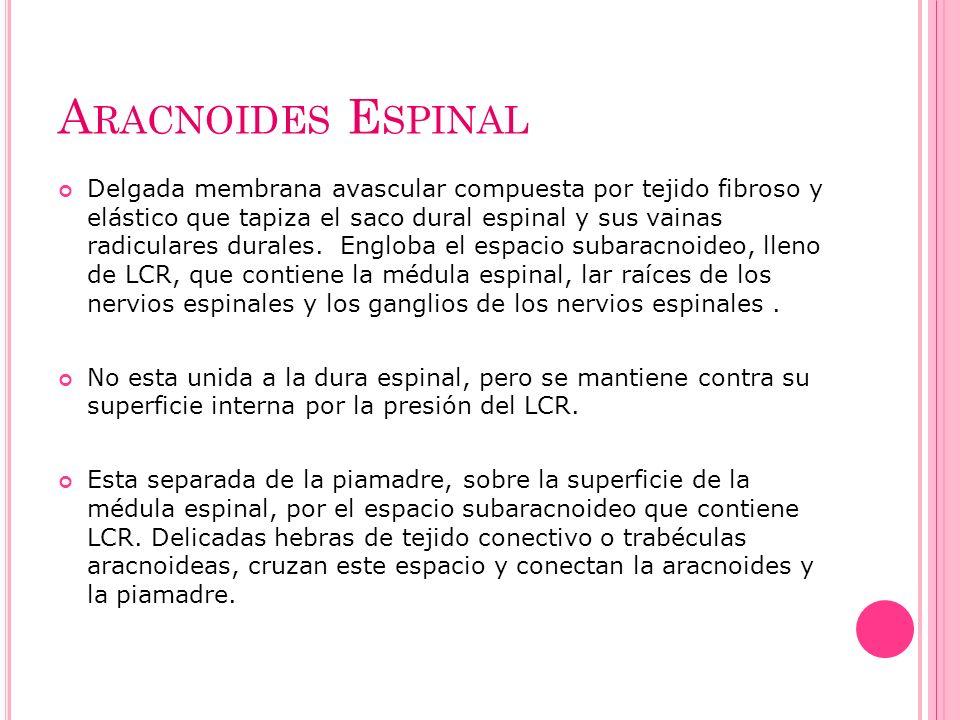 Aracnoides Espinal