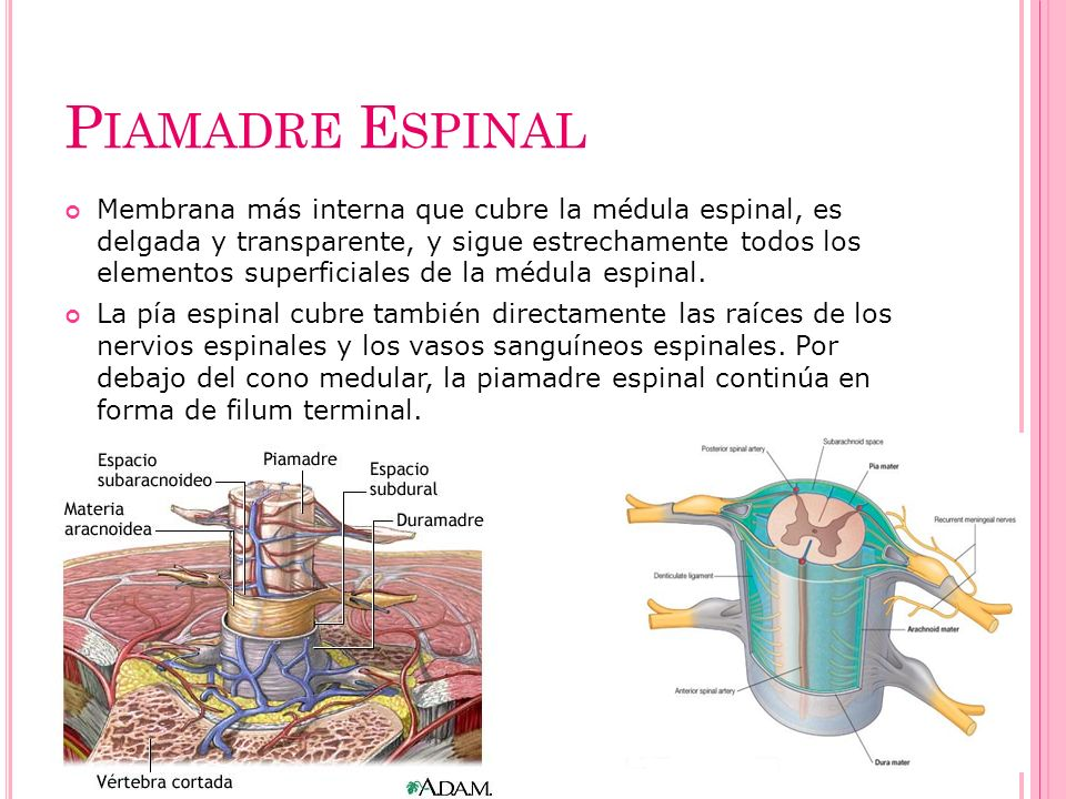 Piamadre Espinal