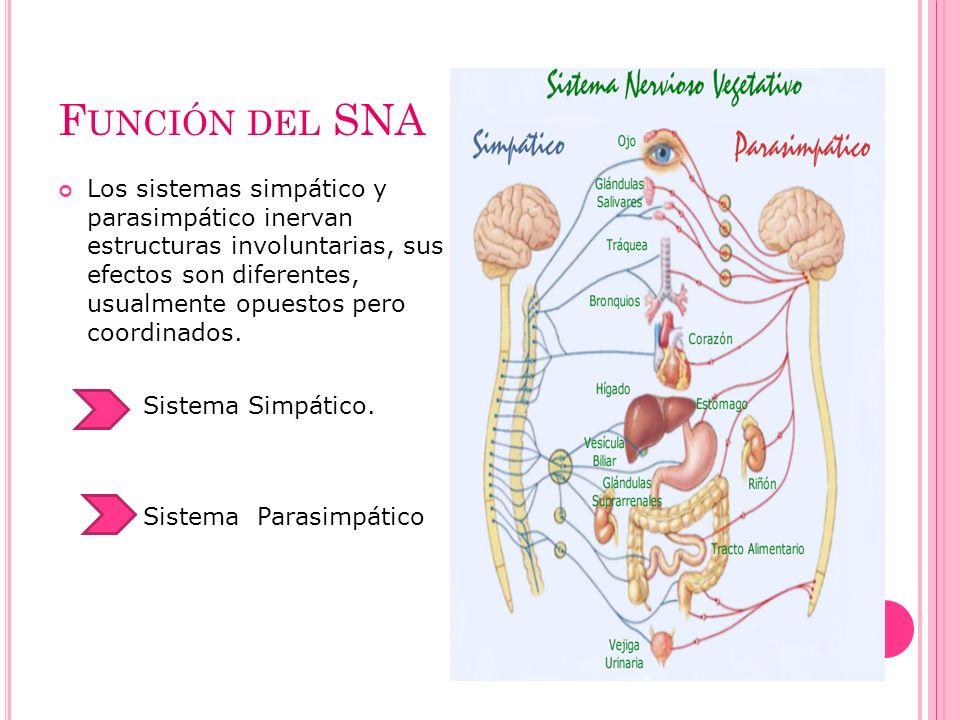 Función del SNA