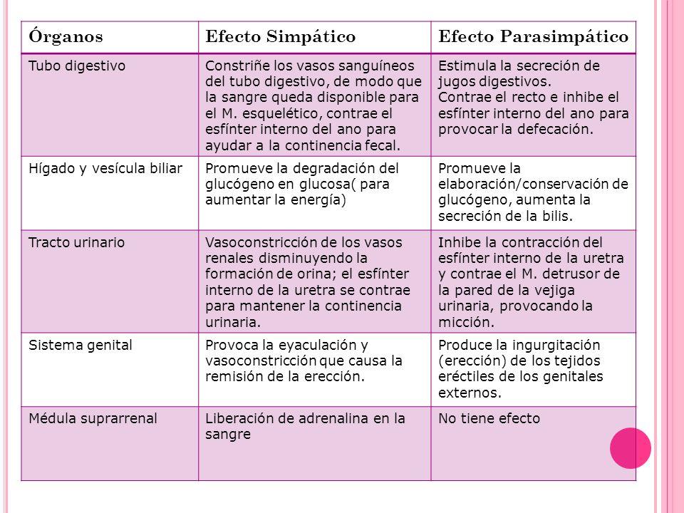 Órganos Efecto Simpático Efecto Parasimpático Tubo digestivo