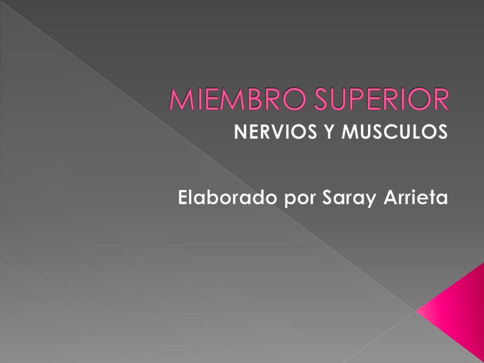 NERVIOS Y MUSCULOS Elaborado por Saray Arrieta