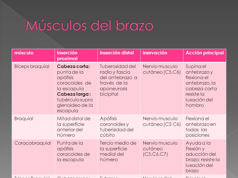 Músculos del brazo músculo Inserción proximal Inserción distal