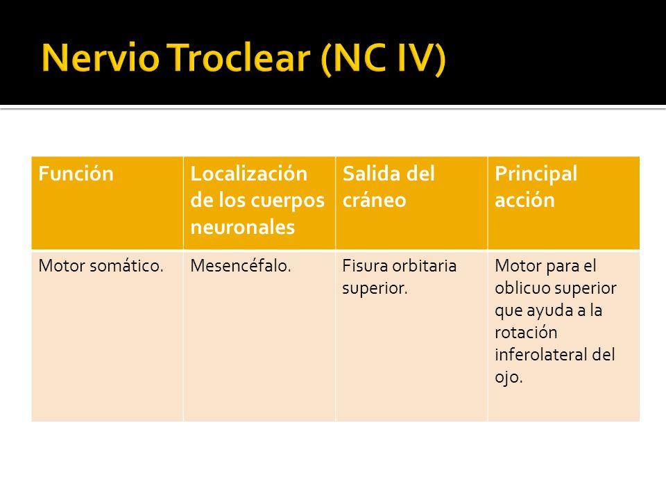 Nervio Troclear (NC IV)