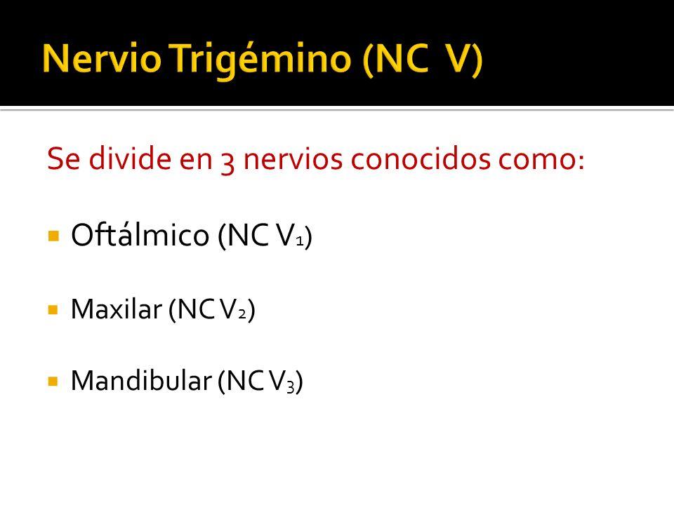 Nervio Trigémino (NC V)